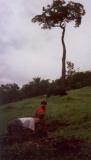 Riforestamento-con-Bariguda