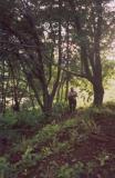 Riforestamento-con-Mudas
