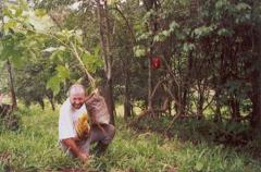 Riforestamento-con-Ray-su-Albero-intero